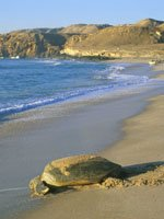 Oman - beaches