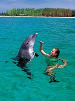 Bahamas - Wildlife