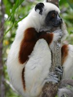 Madagascar - wildlife