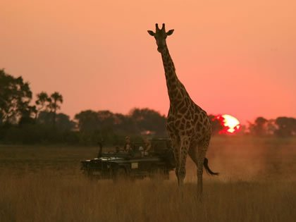 Zambia Safari Holidays