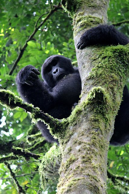 Breath-taking Bwindi Impenetrable Forest Holidays