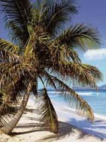 Antigua Holidays - world class beaches