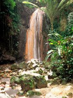 St Lucia Holidays - lush tropical nature