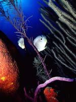 Trinidad & Tobago Holidays - stunning underwater wildlife for divers