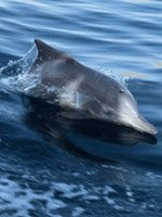 Oman Holidays - dolphin watching trips
