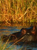 Botswana Holidays - amazing wildlife