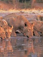 Tanzania Safari Holidays - spot the Big Five