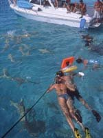 Tahiti Holidays - great diving sites
