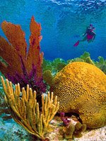 Florida Keys Holidays - amazing diving
