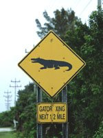 Florida Keys Holidays - watch out for the local wildlife!