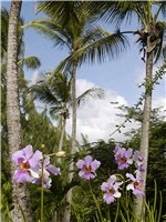 Young Island Holidays - lush tropical vegetation