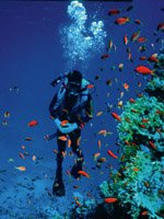 Egypt Holidays - amazing for Scuba diving
