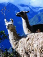 Peru holidays - get close to the wildlife