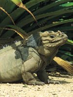Dominican Republic Holidays - wildlife