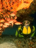 Aruba Holidays - Great for Scuba Diving