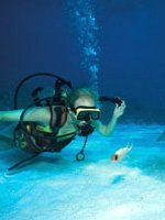 Bermuda Holidays - amazing diving sites