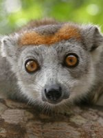 Madagascar Holidays - curious locals