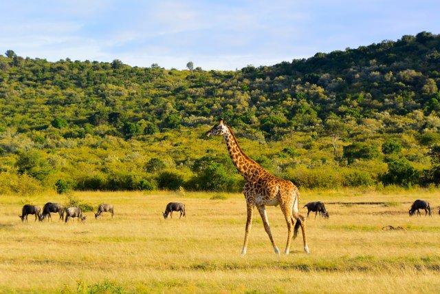 Fantastic Kenya Sky Safaris