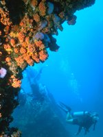 Diving off the coast of Trinidad & Tobago