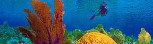 Explore the Florida Keys underwater world